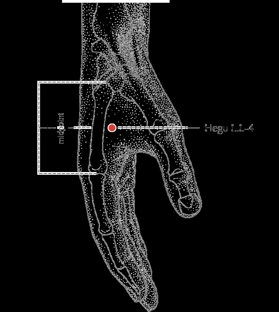 large intestine 4