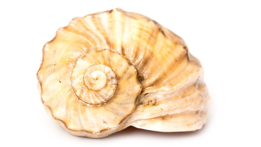 sea shell energy moves in spirals