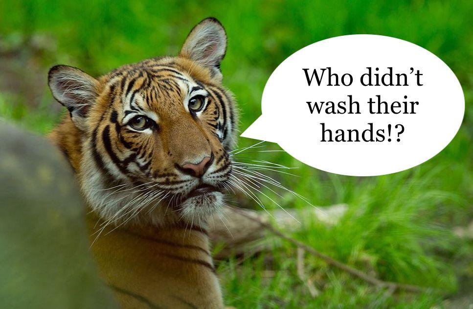 malayan-tiger-bronx-zoo