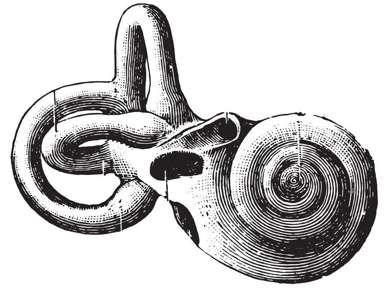 cochlea energy moves in spirals