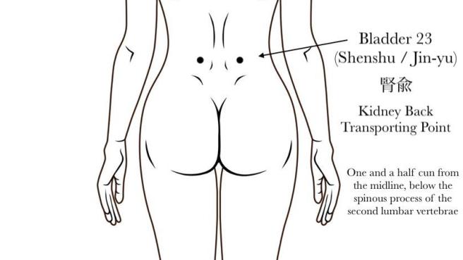 Bladder 23 Acupuncture Point