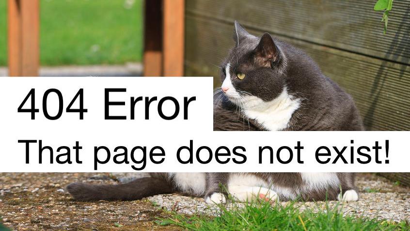 404 error cat