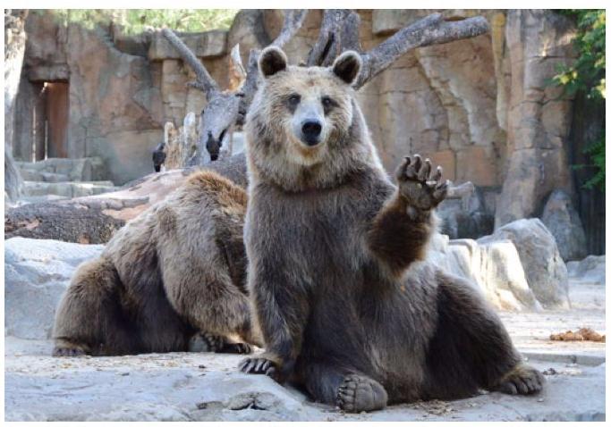 bear-paw.jpg