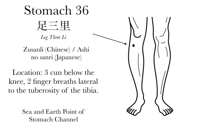 Stomach 36 Acupuncture Point